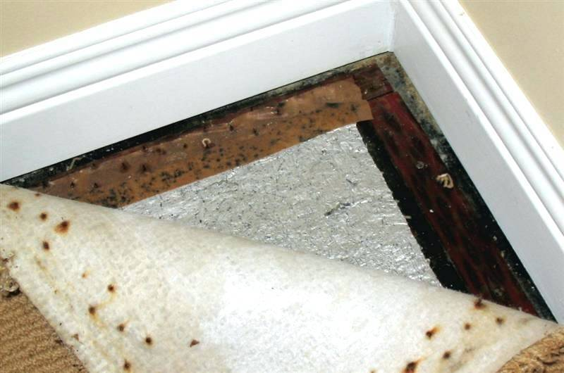 Mildew Smell In Bedroom How To Get Rid Of A Musty Smell From Bat Moisture In Musty Smell In