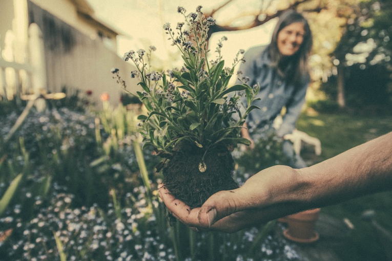 Top Tips to Clean Your Garden Properly