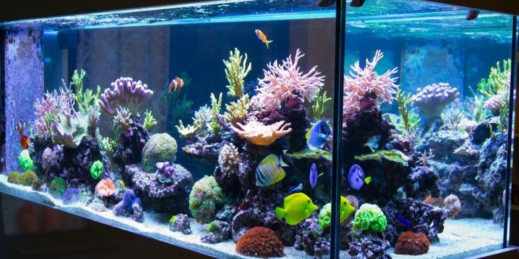 How Much Electricity Does a Fish Tank Use