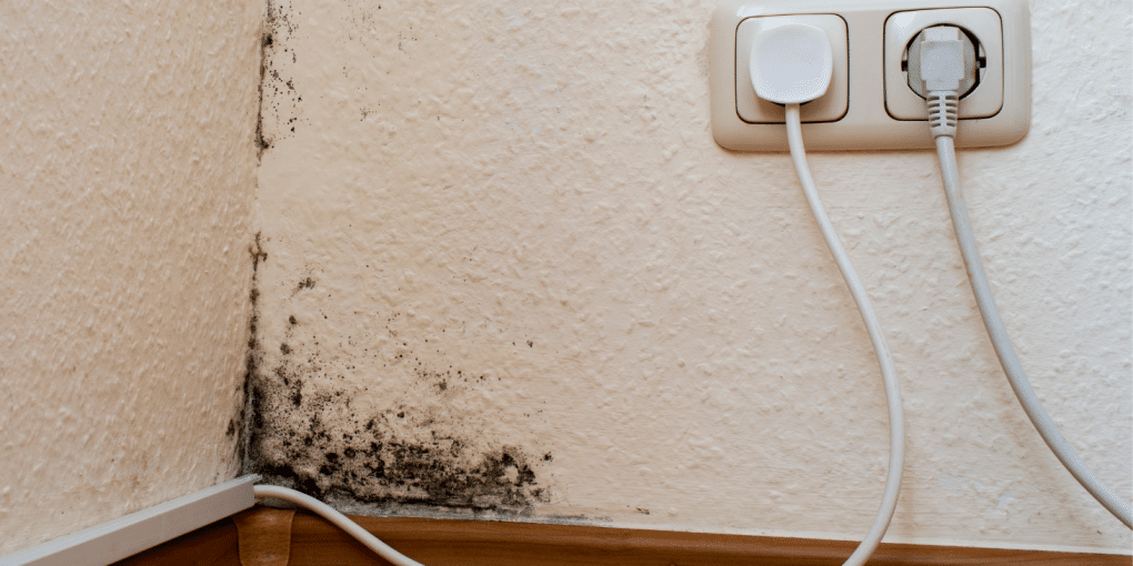 Home Remedies For Black Mold