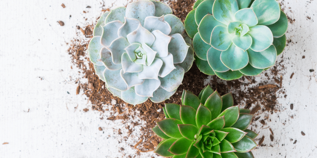 The Most Popular Succulents That You Can Easily Take Care Of At Home