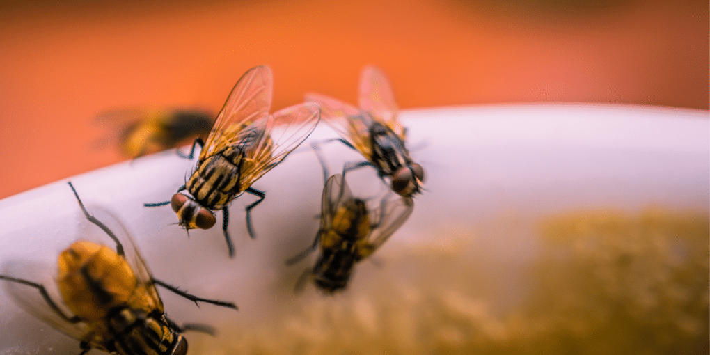 Avoid Flies From Invading Your Home