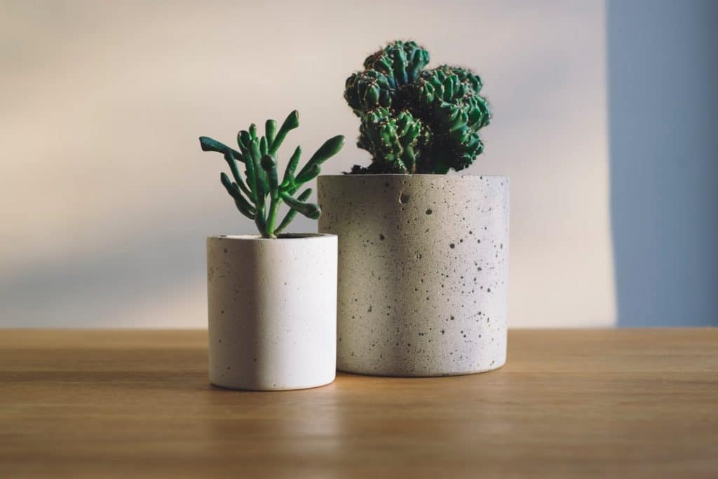 Creating an Eco-Friendly Home with Plant Decor Ideas