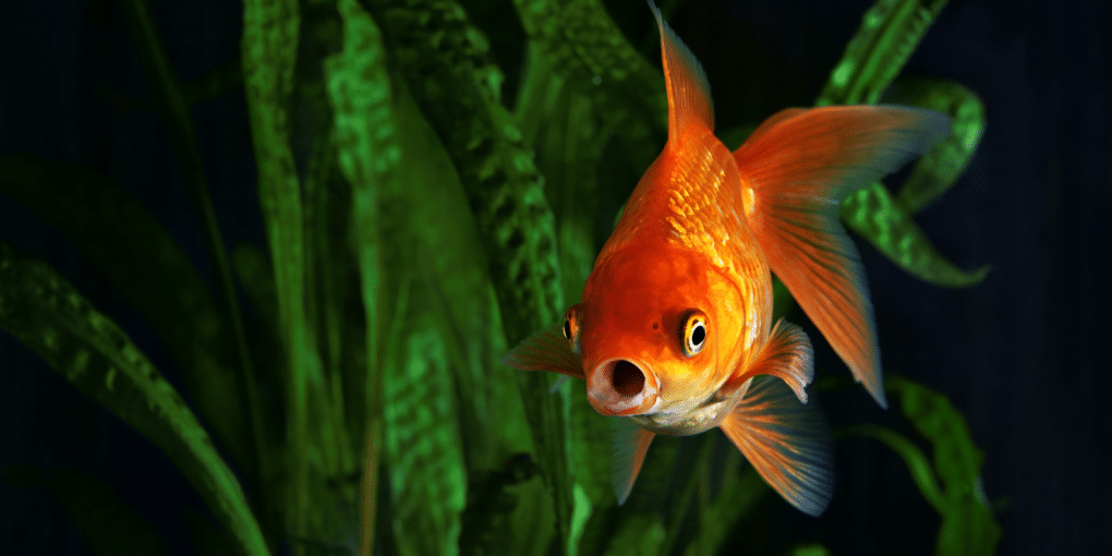 A Close Look At The Basic Needs Of Fish To Survive And Grow
