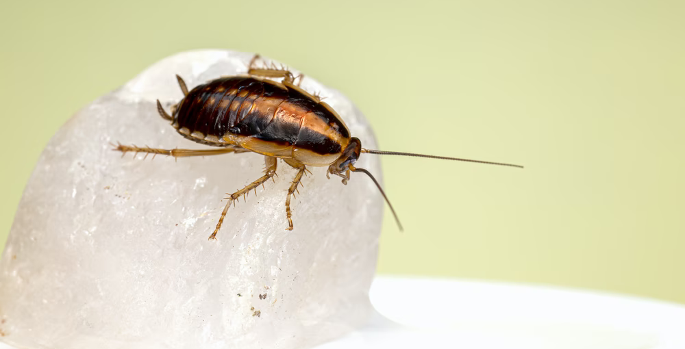 Dealing With Pests Can Be A Real Pain: Here's How To Do It