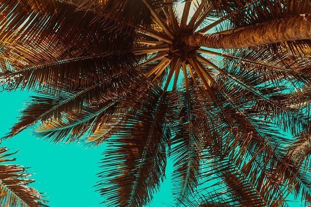 The Pros And Cons Of Pruning Palm Trees That You Should Know About