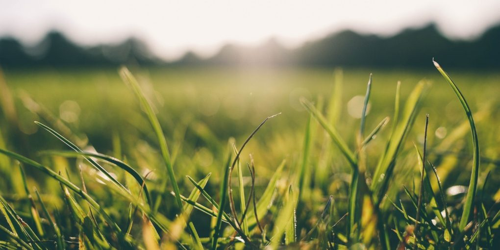 7 Questions to Ask Yourself When Shopping for Grass Seed